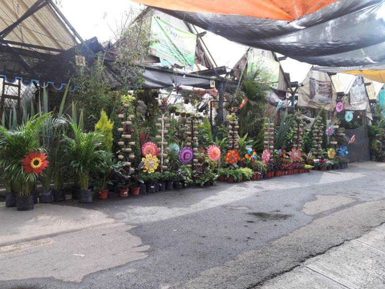 Cuemanco Xochimilco Flower Market in Xochimilco Mexico City