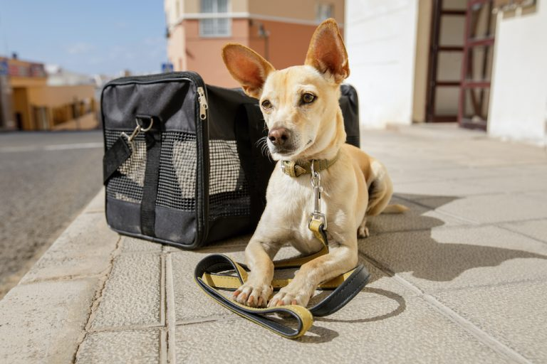 Traveling with a dog to mexico city